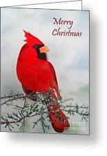 Cardinal Merry Christmas Greeting Card