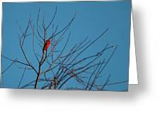 Cardinal Morning Greeting Card