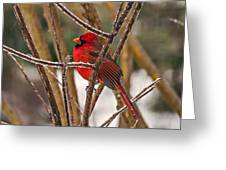 Cardinal On A Winter Day Greeting Card
