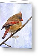 Cardinal On An Icy Twig - Digital Paint Greeting Card