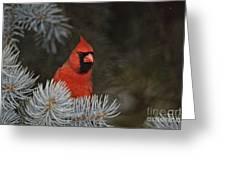 Cardinal Pictures 84 Greeting Card