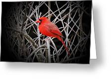 Cardinal Red With Black Greeting Card