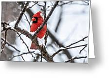Cardinal Snow Scene Greeting Card