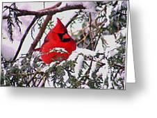 Cardinal Snowbound Greeting Card