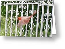 Cardinal Tail Up Landing Greeting Card