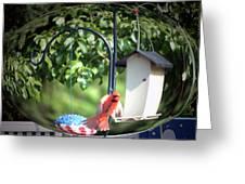 Cardinal Tail Wide Landing Digital Art Greeting Card