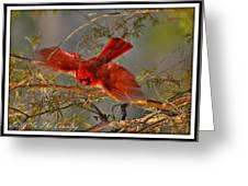 Cardinal Taking Flight Greeting Card