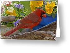 Cardinal With Pansies And Decorations Greeting Card
