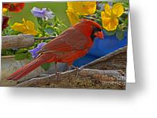 Cardinal With Pansies Greeting Card