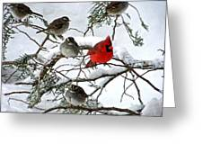 Cardinal With White Throated Sparrows Greeting Card