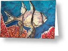 Cardinalfish Greeting Card
