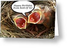 Cardinals Birthday Card Greeting Card