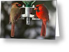 Cardinals Greeting Card by John Kunze