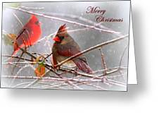 Cardinals - Male And Female - Img_003card Greeting Card