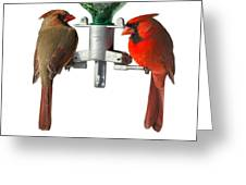Cardinals On White Greeting Card by John Kunze
