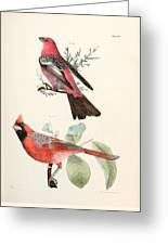 Cardinals Greeting Card by Philip Ralley