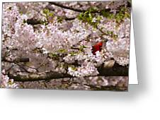 Cardnel In A Cherry Tree Greeting Card
