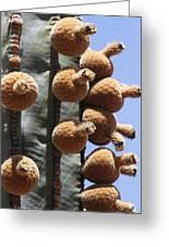 Cardon Cactus Fruit Greeting Card