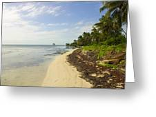 Caribbean Beach In Ambergris Caye Belize Greeting Card