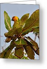 Caribbean Parakeet Greeting Card