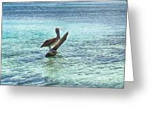 Caribbean Pelican I Greeting Card