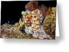 Caribbean Reef Octopus II Greeting Card