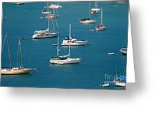Caribbean Sailboats Greeting Card by Amy Cicconi