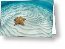 Caribbean Sea Star Greeting Card