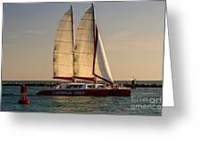 Caribbean Spirit Sails Miami Greeting Card