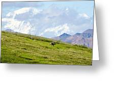 Caribou And Mount Mckinley Greeting Card