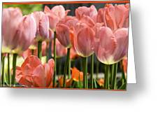 Caring Pink Tulip Time Greeting Card