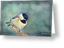 Carlina Chickadee With Soft Blue Bokeh Greeting Card