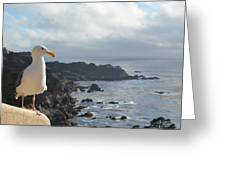Carlos The Pacific Gull Greeting Card