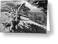Carmel Beach City Park Black And White Greeting Card