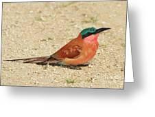 Carmine Colors Greeting Card