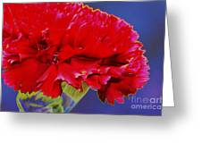 Carnation Carnation Greeting Card