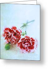 Carnations Greeting Card by Stephanie Frey