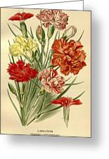Carnations Greeting Card by Philip Ralley