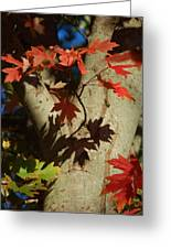 Carolina Autumn Greeting Card