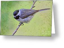 Carolina Chickadee On Angled Perch Greeting Card