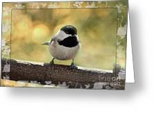 Carolina Chickadee With Decorative Frame IIi Greeting Card
