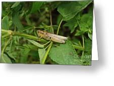 Carolina Locust Greeting Card