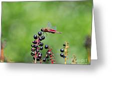 Carolina Saddlebags Greeting Card
