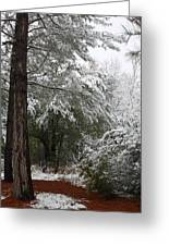 Carolina Snowfall Greeting Card
