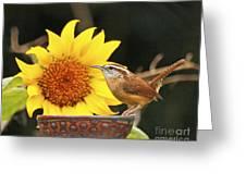 Carolina Wren And Sunflowers Greeting Card
