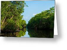 Caroni Swamp Greeting Card