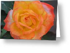 Caroty Splendor - Rose Greeting Card