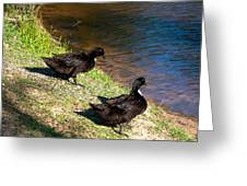 Carpenters Park-ducks Greeting Card