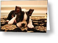 Carpet Cleaner Greeting Card