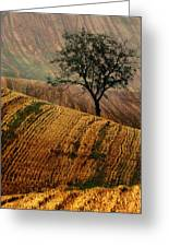 Carpet Fields Of Moravia Greeting Card